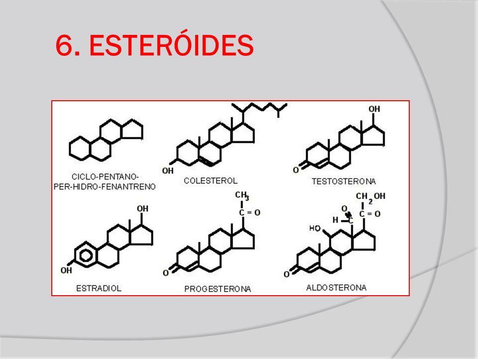 6. ESTERÓIDES