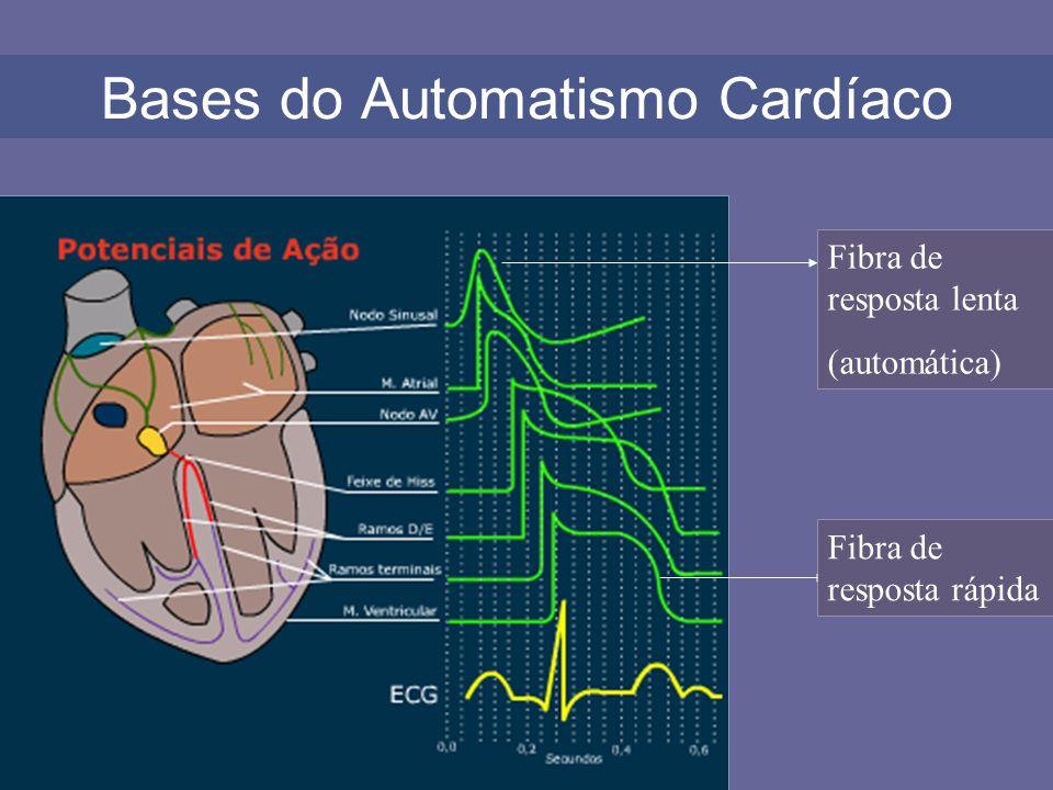 Bases do Automatismo Cardíaco Fibra de resposta lenta (automática) Fibra de resposta rápida