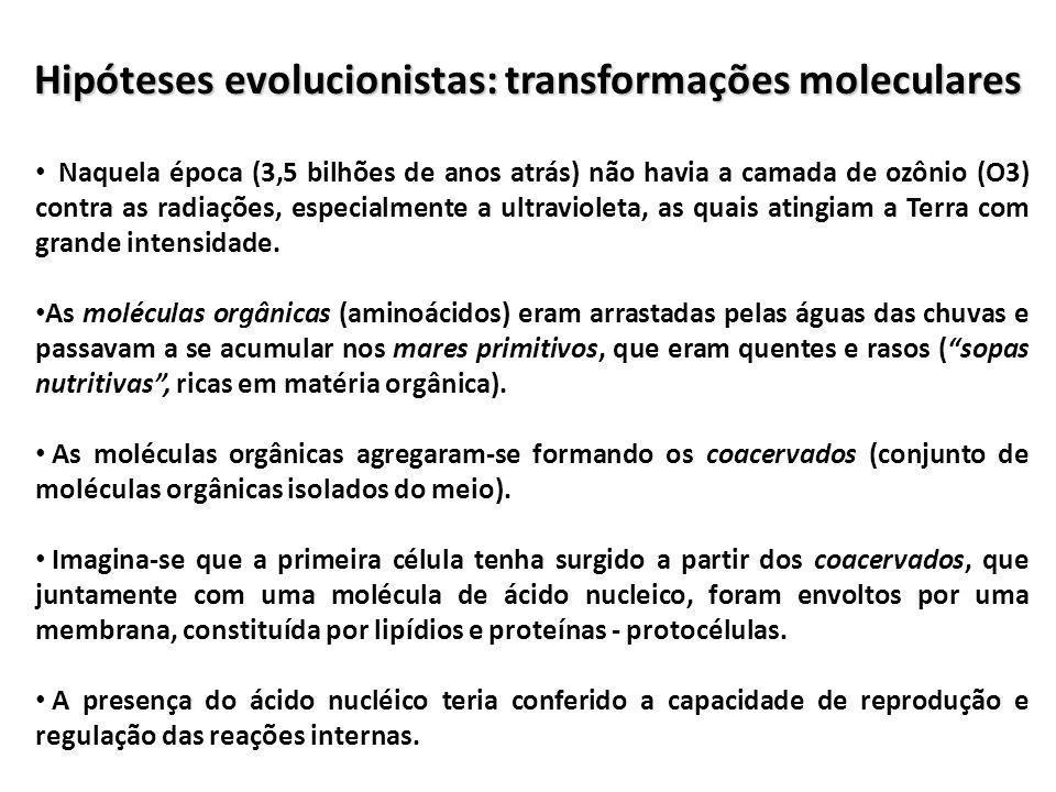 Hipóteses evolucionistas: transformações moleculares Naquela época (3,5 bilhões de anos atrás) não havia a camada de ozônio (O3) contra as radiações,