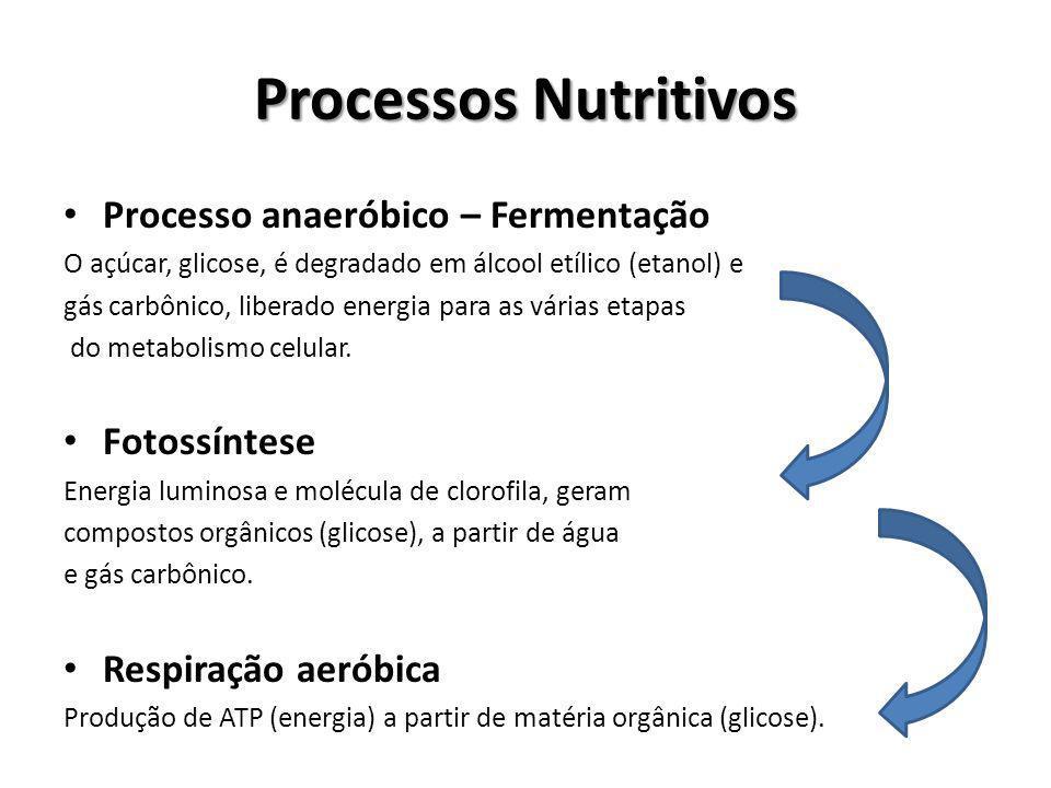 Processos Nutritivos Processo anaeróbico – Fermentação O açúcar, glicose, é degradado em álcool etílico (etanol) e gás carbônico, liberado energia par