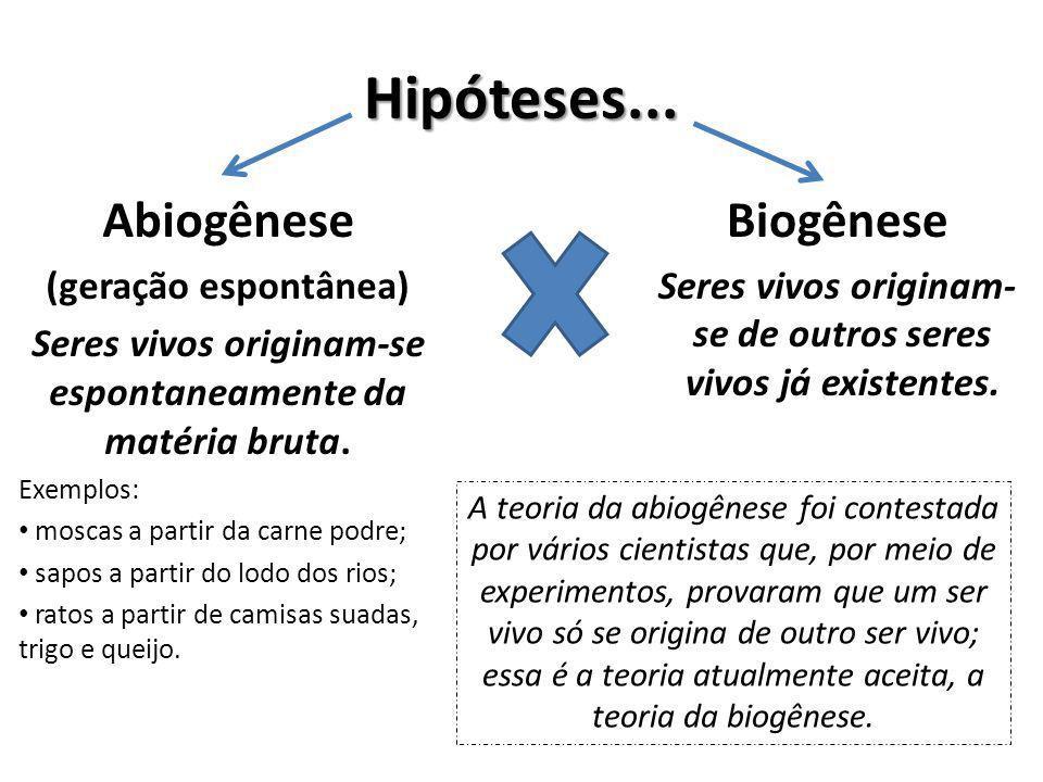 Hipóteses... Abiogênese (geração espontânea) Seres vivos originam-se espontaneamente da matéria bruta. Exemplos: moscas a partir da carne podre; sapos