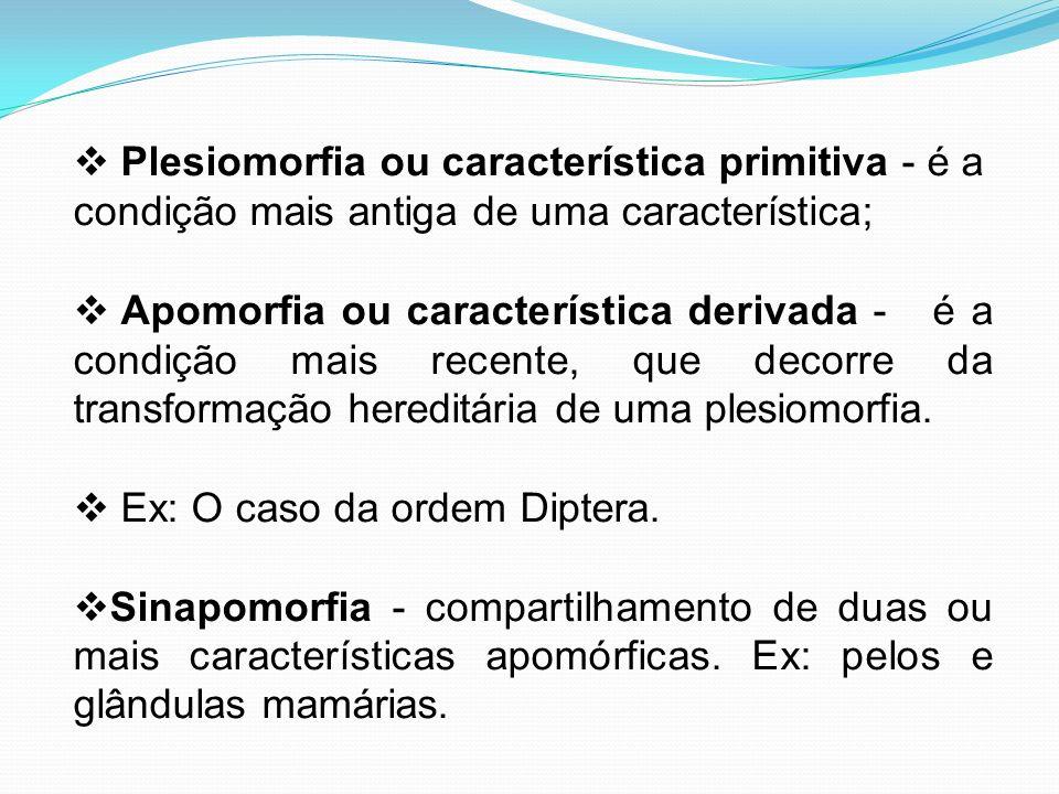 Plesiomorfia ou característica primitiva - é a condição mais antiga de uma característica; Apomorfia ou característica derivada - é a condição mais re