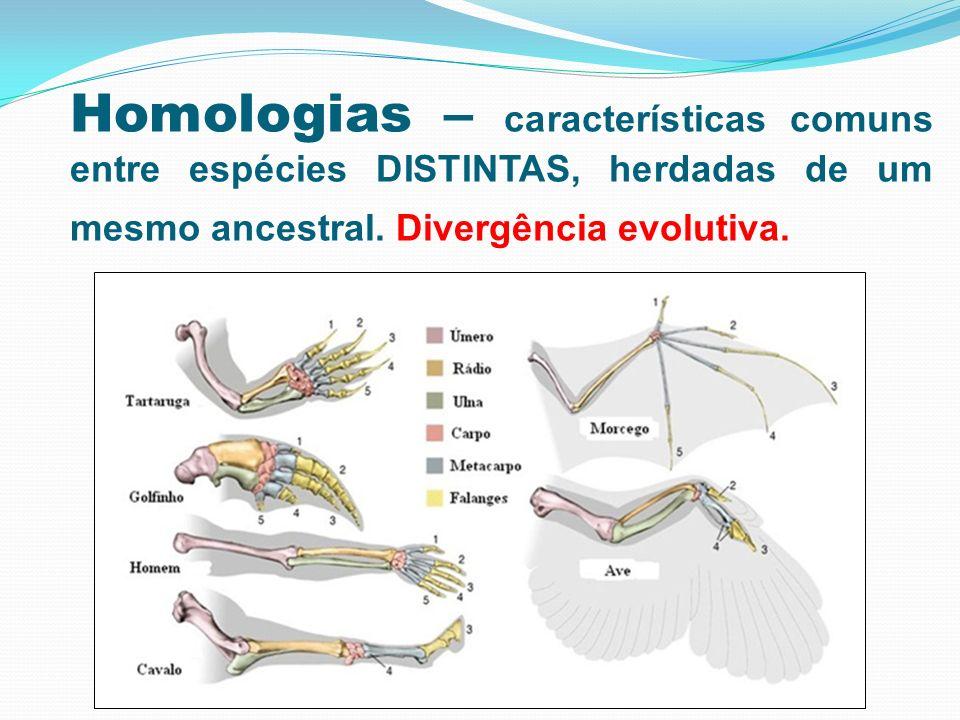 Homologias – características comuns entre espécies DISTINTAS, herdadas de um mesmo ancestral. Divergência evolutiva.