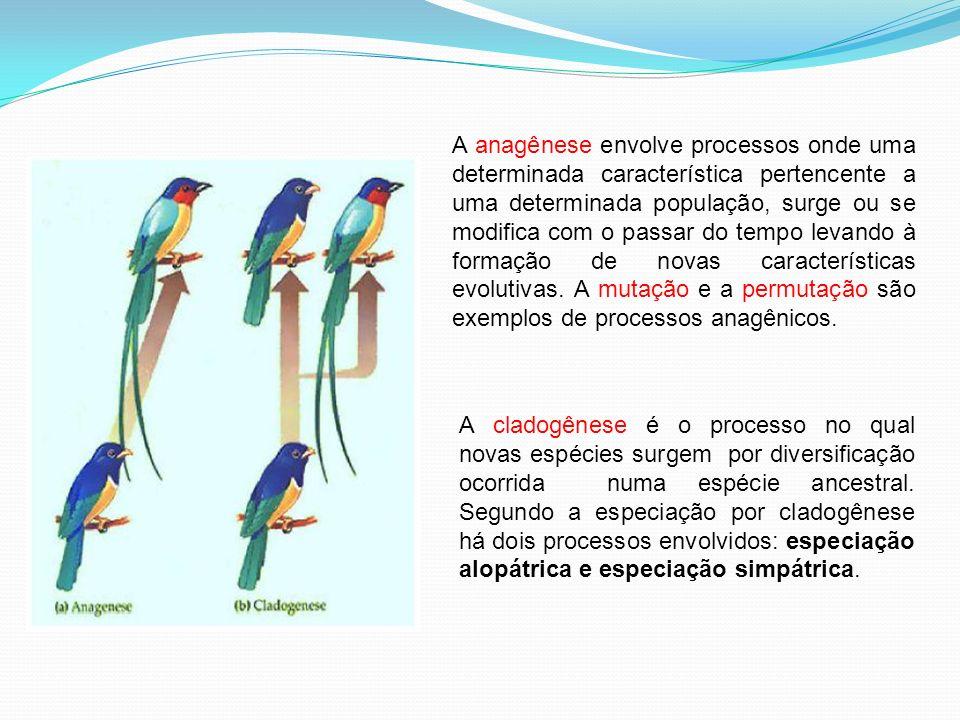 A anagênese envolve processos onde uma determinada característica pertencente a uma determinada população, surge ou se modifica com o passar do tempo