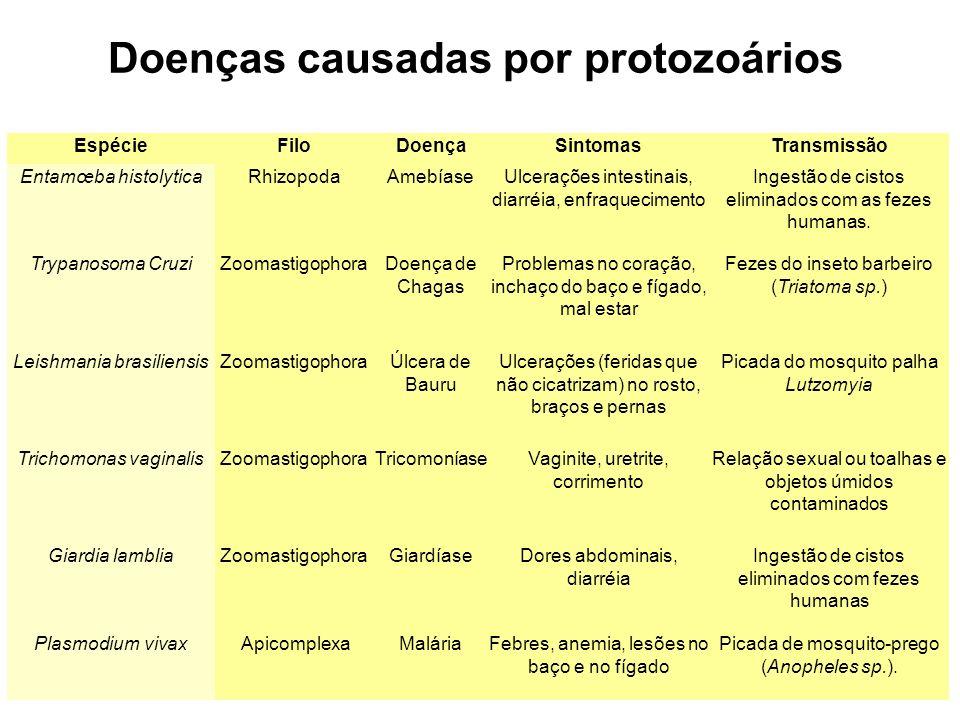 EspécieFiloDoençaSintomasTransmissão Entamœba histolyticaRhizopodaAmebíaseUlcerações intestinais, diarréia, enfraquecimento Ingestão de cistos elimina