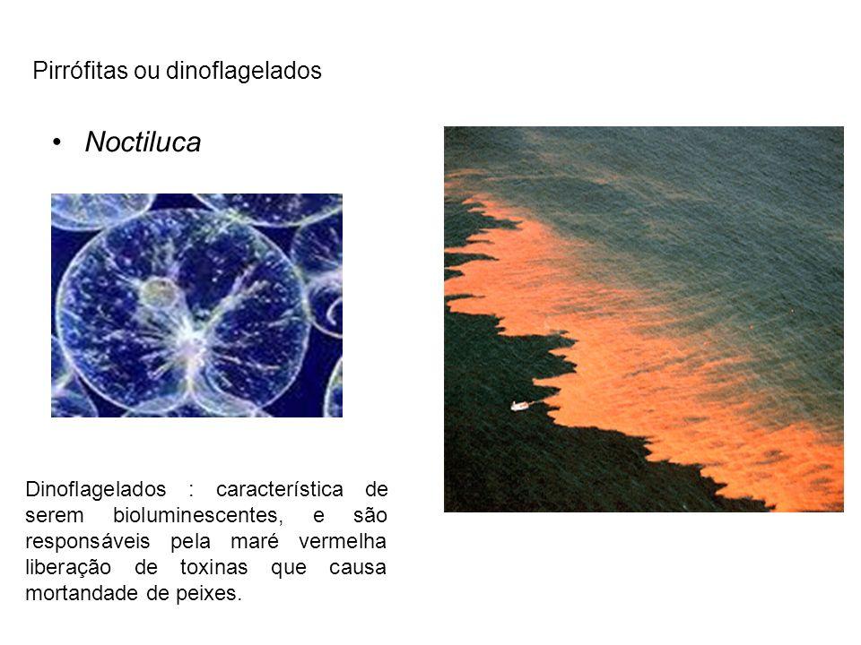 Noctiluca Dinoflagelados : característica de serem bioluminescentes, e são responsáveis pela maré vermelha liberação de toxinas que causa mortandade d