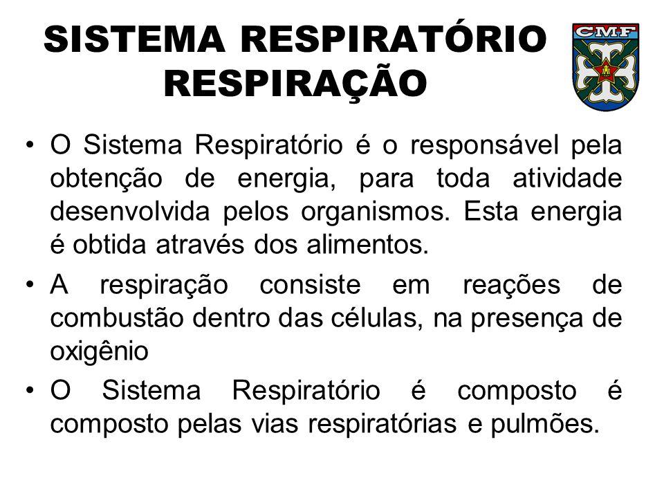 SISTEMA RESPIRATÓRIO RESPIRAÇÃO O Sistema Respiratório é o responsável pela obtenção de energia, para toda atividade desenvolvida pelos organismos. Es