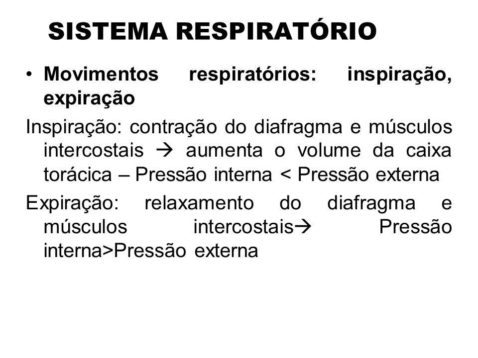 SISTEMA RESPIRATÓRIO Movimentos respiratórios: inspiração, expiração Inspiração: contração do diafragma e músculos intercostais aumenta o volume da ca