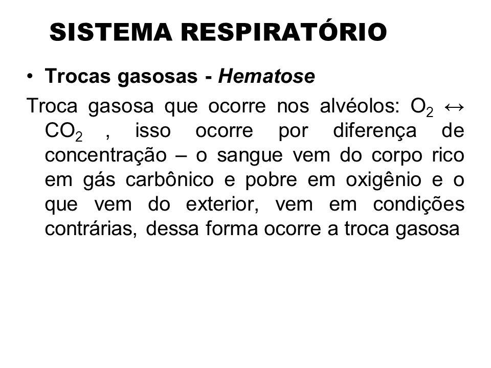 Trocas gasosas Slide_13