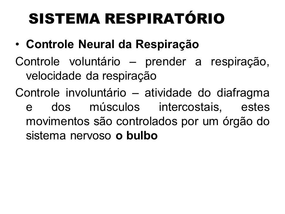 SISTEMA RESPIRATÓRIO Controle Neural da Respiração Controle voluntário – prender a respiração, velocidade da respiração Controle involuntário – ativid