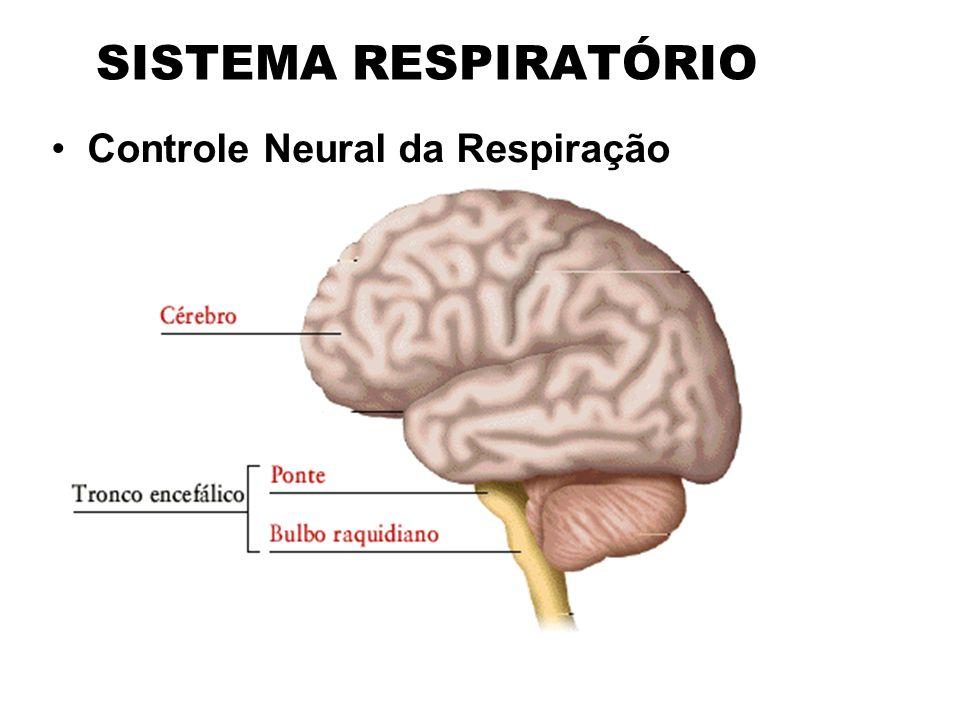 SISTEMA RESPIRATÓRIO Controle Neural da Respiração