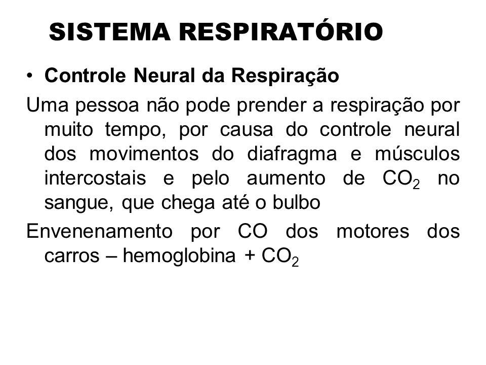 SISTEMA RESPIRATÓRIO Controle Neural da Respiração Uma pessoa não pode prender a respiração por muito tempo, por causa do controle neural dos moviment