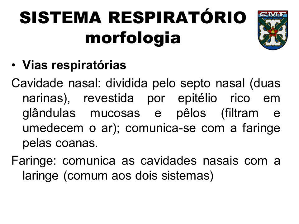 SISTEMA RESPIRATÓRIO morfologia Vias respiratórias Cavidade nasal: dividida pelo septo nasal (duas narinas), revestida por epitélio rico em glândulas