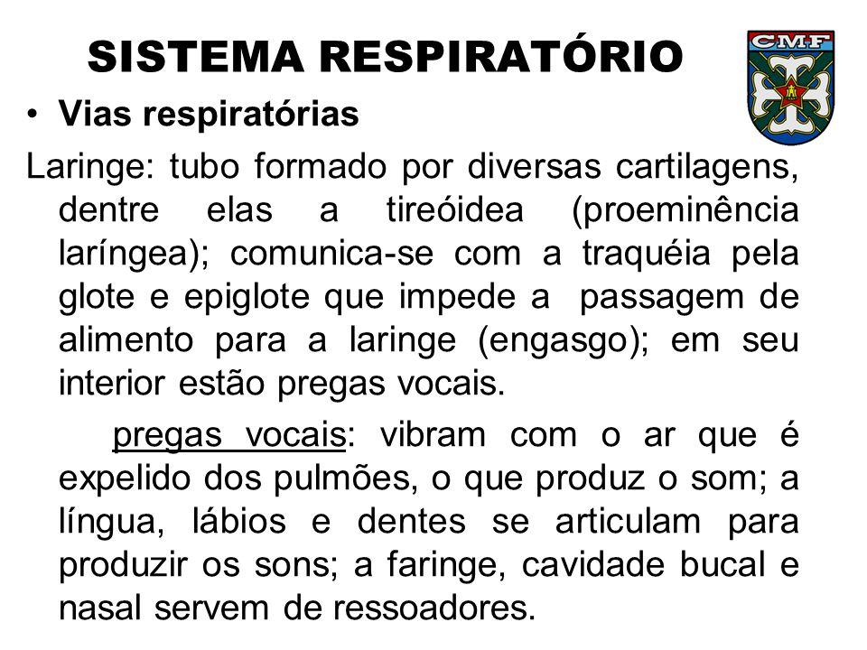 SISTEMA RESPIRATÓRIO Vias respiratórias Laringe: tubo formado por diversas cartilagens, dentre elas a tireóidea (proeminência laríngea); comunica-se c