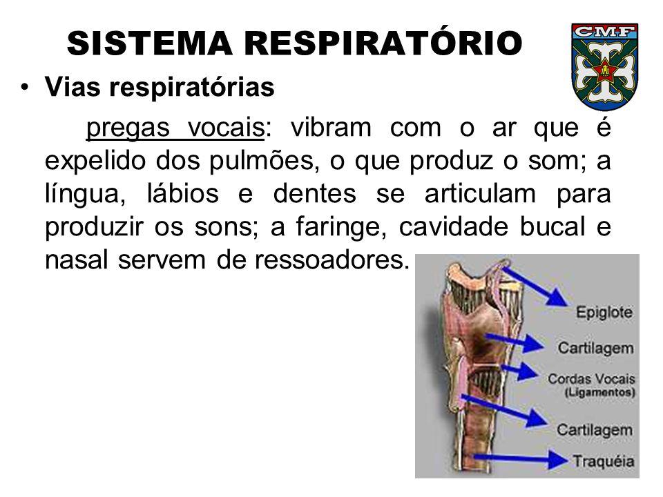 SISTEMA RESPIRATÓRIO Vias respiratórias pregas vocais: vibram com o ar que é expelido dos pulmões, o que produz o som; a língua, lábios e dentes se ar