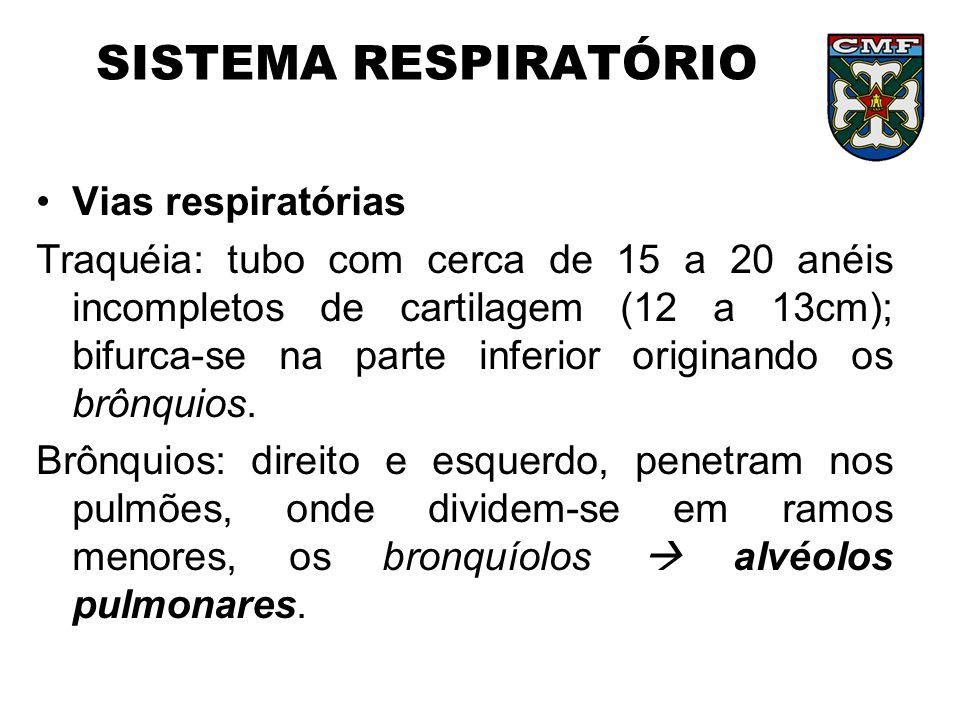 SISTEMA RESPIRATÓRIO Vias respiratórias Traquéia: tubo com cerca de 15 a 20 anéis incompletos de cartilagem (12 a 13cm); bifurca-se na parte inferior