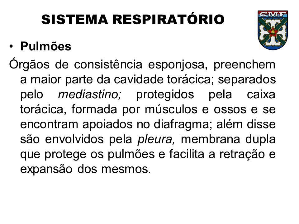 SISTEMA RESPIRATÓRIO Pulmões Órgãos de consistência esponjosa, preenchem a maior parte da cavidade torácica; separados pelo mediastino; protegidos pel