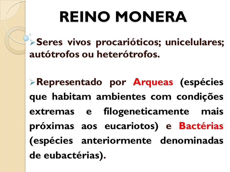 REINO MONERA Seres vivos procarióticos; unicelulares; autótrofos ou heterótrofos. Representado por Arqueas (espécies que habitam ambientes com condiçõ