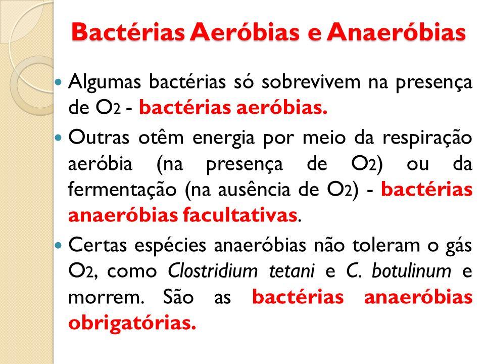 Bactérias Aeróbias e Anaeróbias Algumas bactérias só sobrevivem na presença de O 2 - bactérias aeróbias. Outras otêm energia por meio da respiração ae