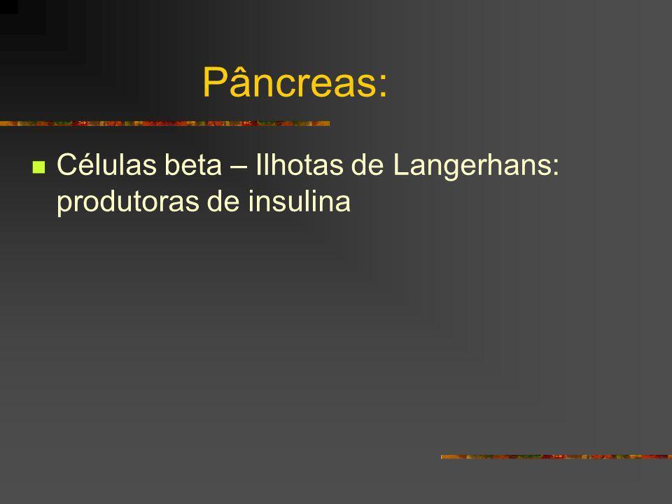 Pâncreas: Células beta – Ilhotas de Langerhans: produtoras de insulina