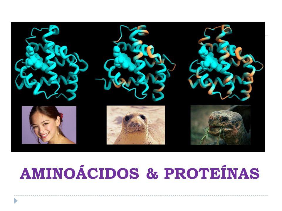 AMINOÁCIDOS & PROTEÍNAS