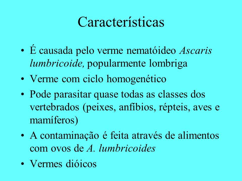 Características É causada pelo verme nematóideo Ascaris lumbricoide, popularmente lombriga Verme com ciclo homogenético Pode parasitar quase todas as