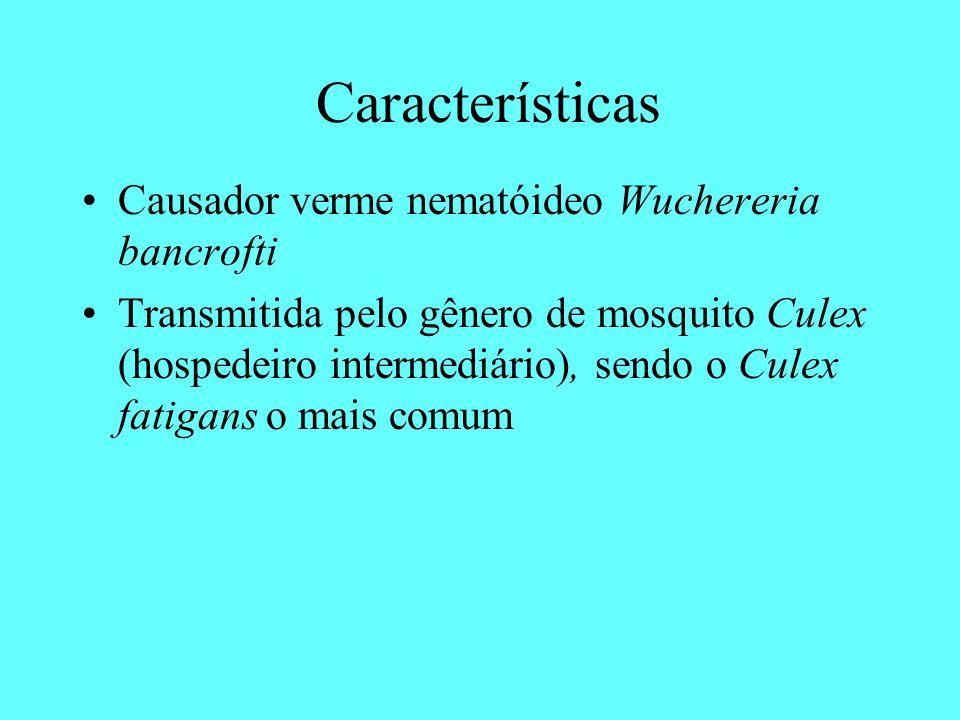 Características Causador verme nematóideo Wuchereria bancrofti Transmitida pelo gênero de mosquito Culex (hospedeiro intermediário), sendo o Culex fat