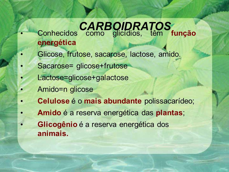 CARBOIDRATOS Conhecidos como glicídios, têm função energética Glicose, frutose, sacarose, lactose, amido. Sacarose= glicose+frutose Lactose=glicose+ga