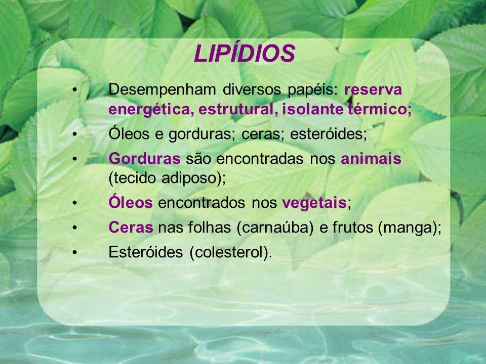 LIPÍDIOS Desempenham diversos papéis: reserva energética, estrutural, isolante térmico; Óleos e gorduras; ceras; esteróides; Gorduras são encontradas nos animais (tecido adiposo); Óleos encontrados nos vegetais; Ceras nas folhas (carnaúba) e frutos (manga); Esteróides (colesterol).