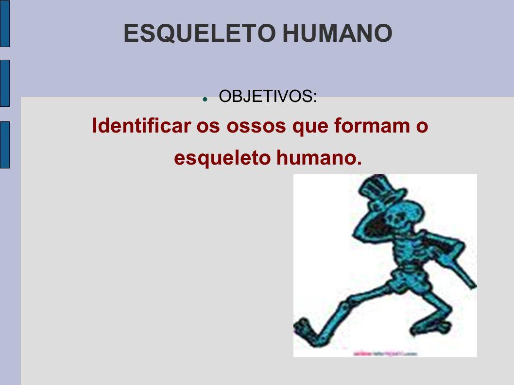 ESQUELETO HUMANO OBJETIVOS: Identificar os ossos que formam o esqueleto humano.