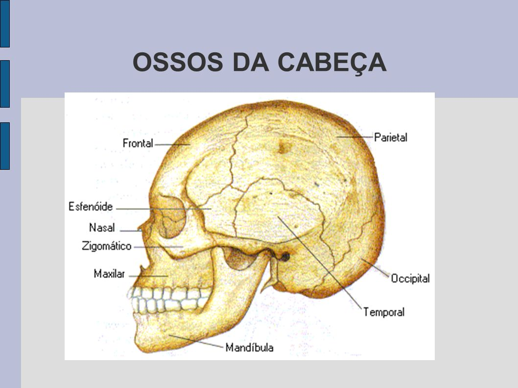OSSOS DA CABEÇA