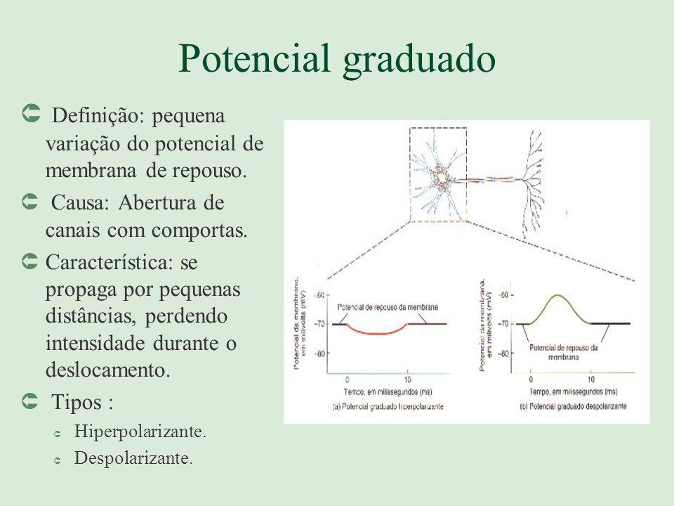 Potencial graduado Û Definição: pequena variação do potencial de membrana de repouso. Û Causa: Abertura de canais com comportas. ÛCaracterística: se p