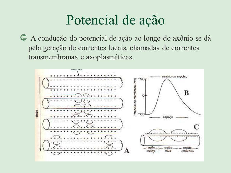 Potencial de ação Û A condução do potencial de ação ao longo do axônio se dá pela geração de correntes locais, chamadas de correntes transmembranas e