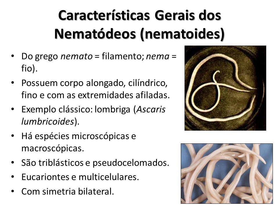 Características Gerais dos Nematódeos (nematoides) Do grego nemato = filamento; nema = fio). Possuem corpo alongado, cilíndrico, fino e com as extremi