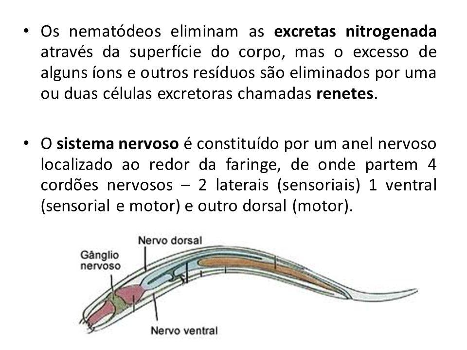 Os nematódeos eliminam as excretas nitrogenada através da superfície do corpo, mas o excesso de alguns íons e outros resíduos são eliminados por uma o