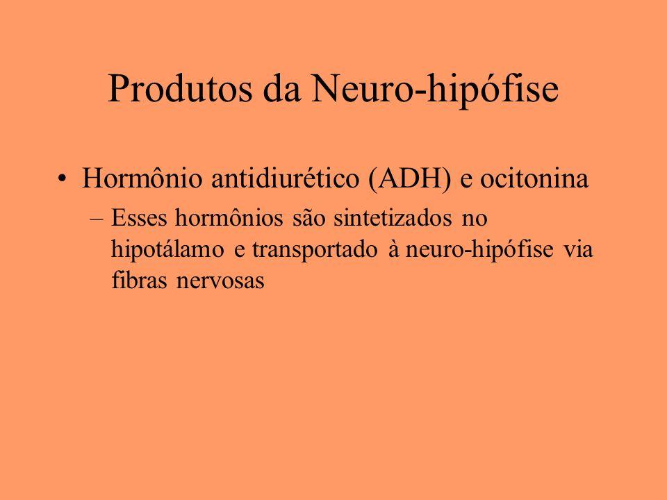 Produtos da Neuro-hipófise Hormônio antidiurético (ADH) e ocitonina –Esses hormônios são sintetizados no hipotálamo e transportado à neuro-hipófise vi