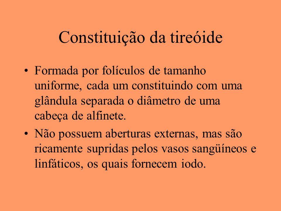 Constituição da tireóide Formada por folículos de tamanho uniforme, cada um constituindo com uma glândula separada o diâmetro de uma cabeça de alfinet