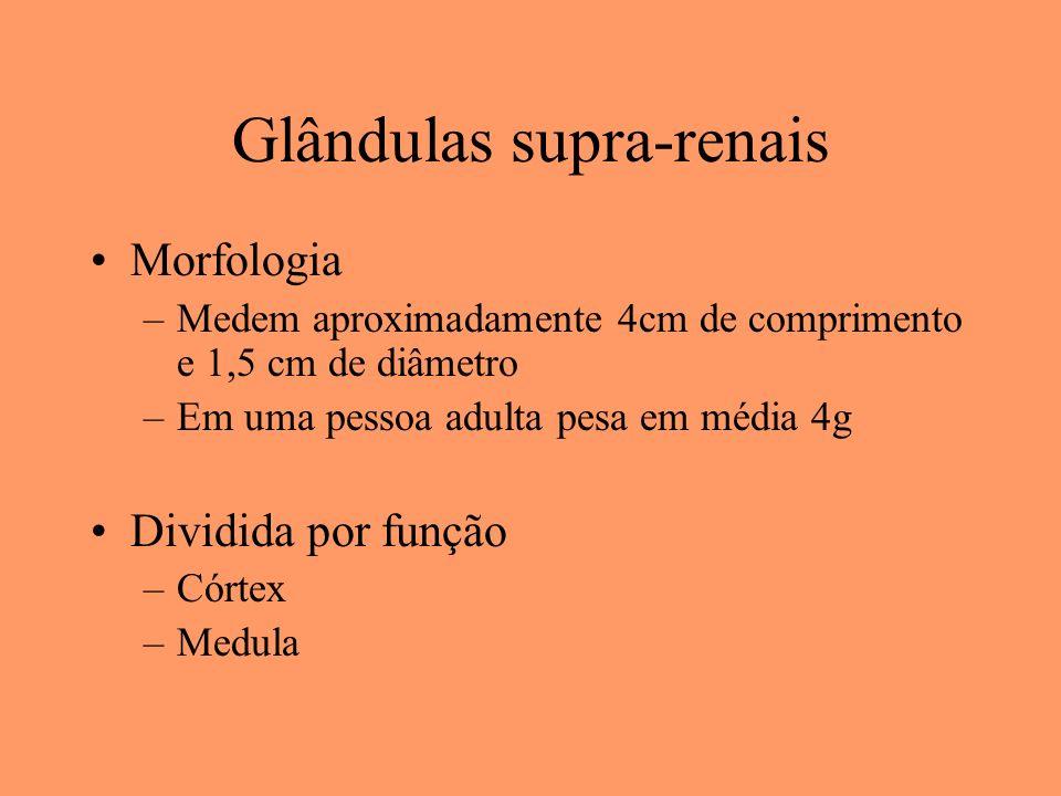Glândulas supra-renais Morfologia –Medem aproximadamente 4cm de comprimento e 1,5 cm de diâmetro –Em uma pessoa adulta pesa em média 4g Dividida por f