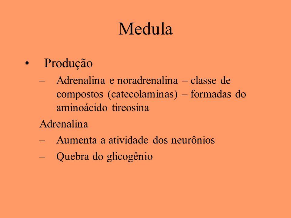 Medula Produção –Adrenalina e noradrenalina – classe de compostos (catecolaminas) – formadas do aminoácido tireosina Adrenalina –Aumenta a atividade d