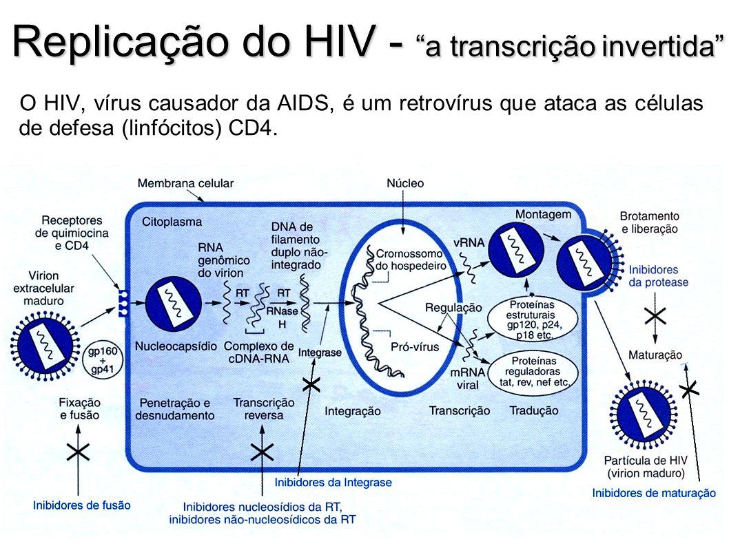 Replicação do HIV - a transcrição invertida O HIV, vírus causador da AIDS, é um retrovírus que ataca as células de defesa (linfócitos) CD4.