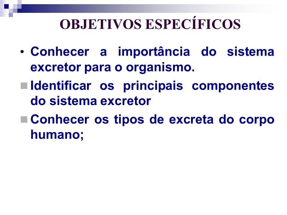 OBJETIVOS ESPECÍFICOS Conhecer a importância do sistema excretor para o organismo. Identificar os principais componentes do sistema excretor Conhecer