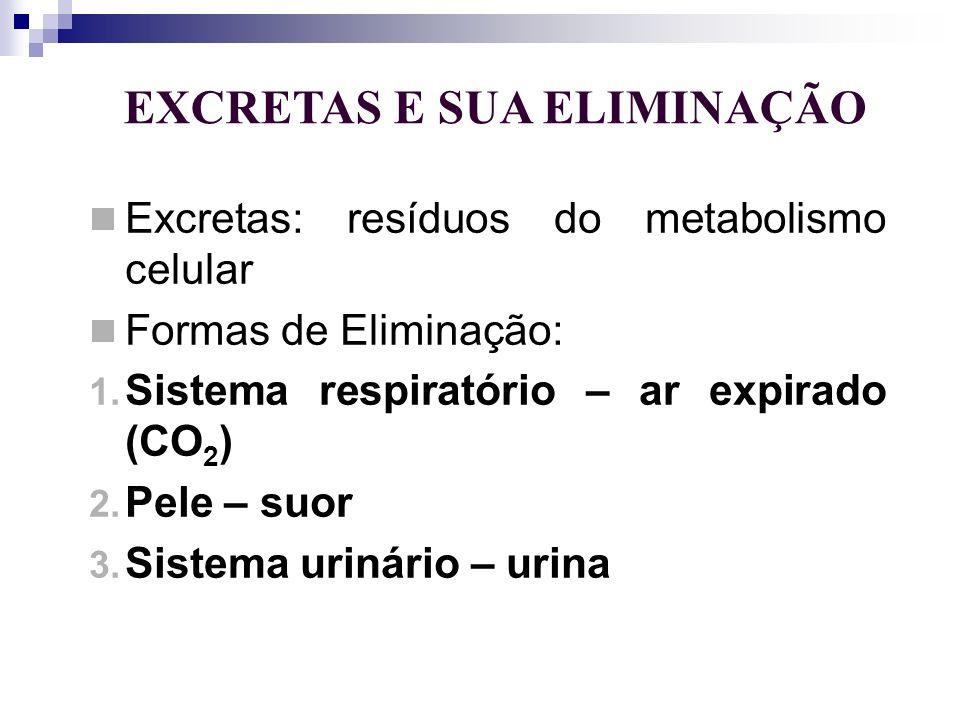 EXCRETAS E SUA ELIMINAÇÃO Excretas: resíduos do metabolismo celular Formas de Eliminação: 1. Sistema respiratório – ar expirado (CO 2 ) 2. Pele – suor