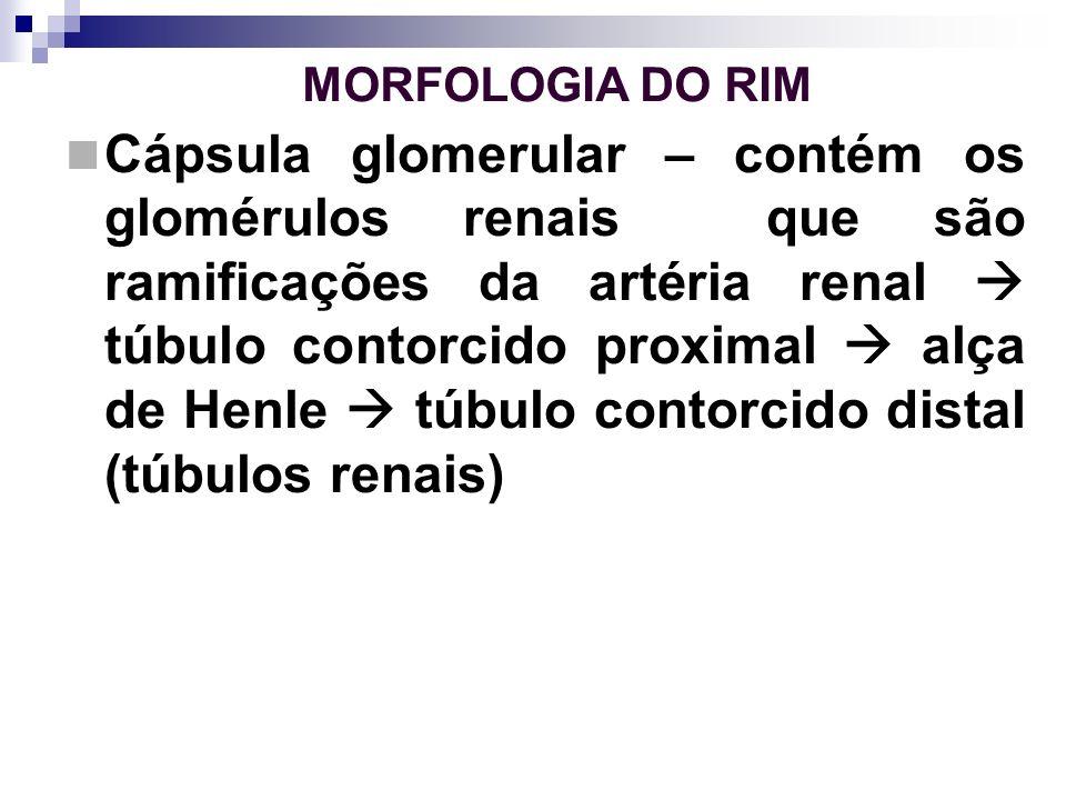 MORFOLOGIA DO RIM Cápsula glomerular – contém os glomérulos renais que são ramificações da artéria renal túbulo contorcido proximal alça de Henle túbu