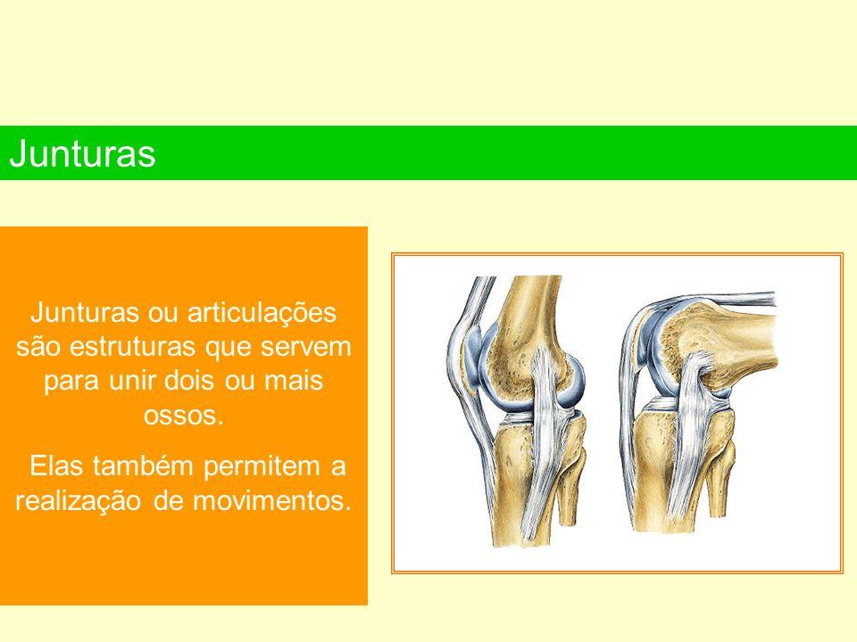 Junturas ou articulações são estruturas que servem para unir dois ou mais ossos. Elas também permitem a realização de movimentos. Junturas