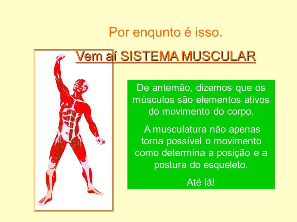 Por enqunto é isso. Vem aí SISTEMA MUSCULAR De antemão, dizemos que os músculos são elementos ativos do movimento do corpo. A musculatura não apenas t