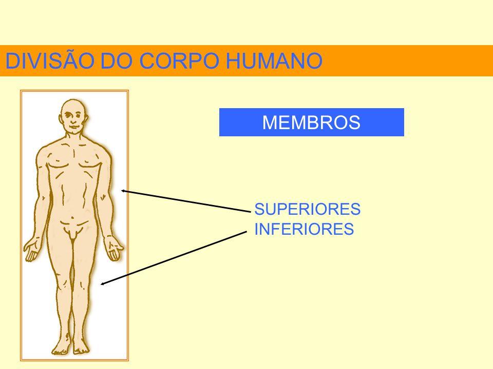Esterno Processo Xifóide Caixa torácica Manúbrio do esterno PRINCIPAIS OSSOS