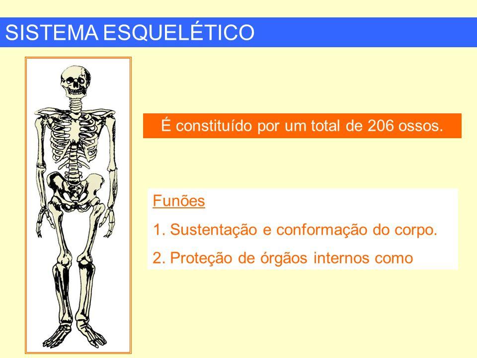 SISTEMA ESQUELÉTICO É constituído por um total de 206 ossos. Funões 1. Sustentação e conformação do corpo. 2. Proteção de órgãos internos como