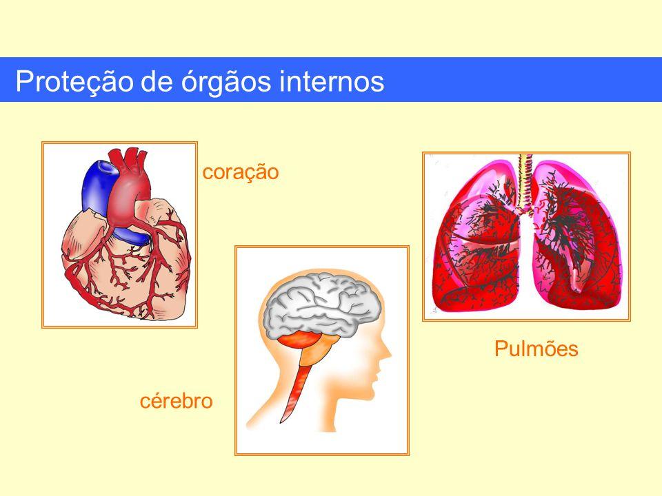 Proteção de órgãos internos coração cérebro Pulmões