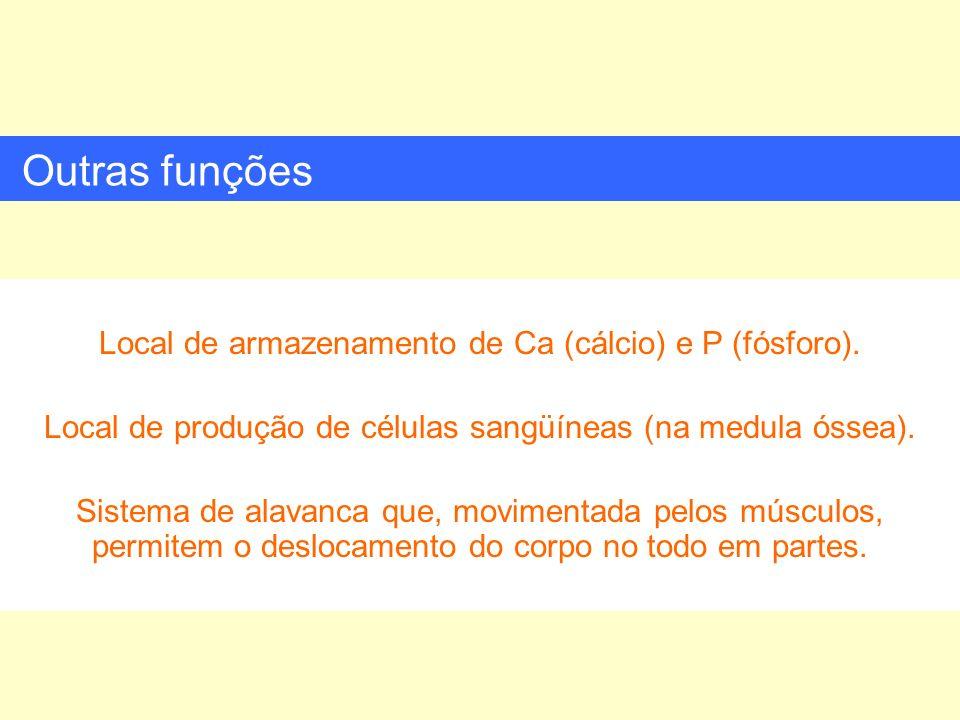 Local de armazenamento de Ca (cálcio) e P (fósforo). Local de produção de células sangüíneas (na medula óssea). Sistema de alavanca que, movimentada p