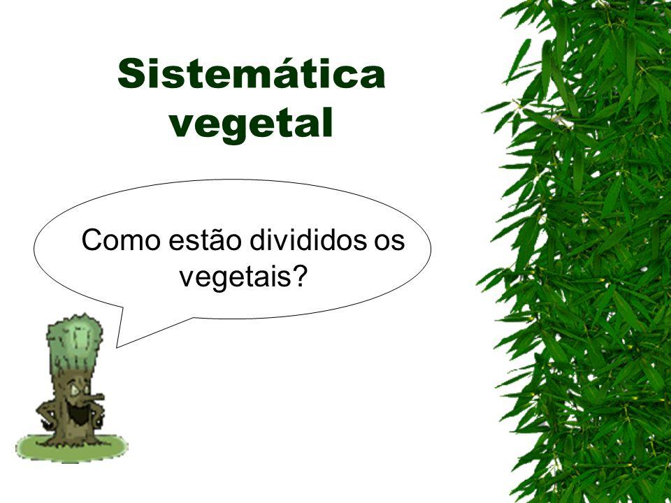Sistemática vegetal Como estão divididos os vegetais?
